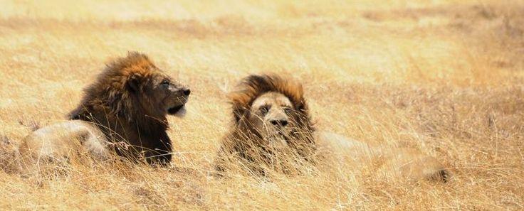 Safaris con estilo. Los Parques del remoto Sur - Extensión opcional a Zanzibar » Tuawo