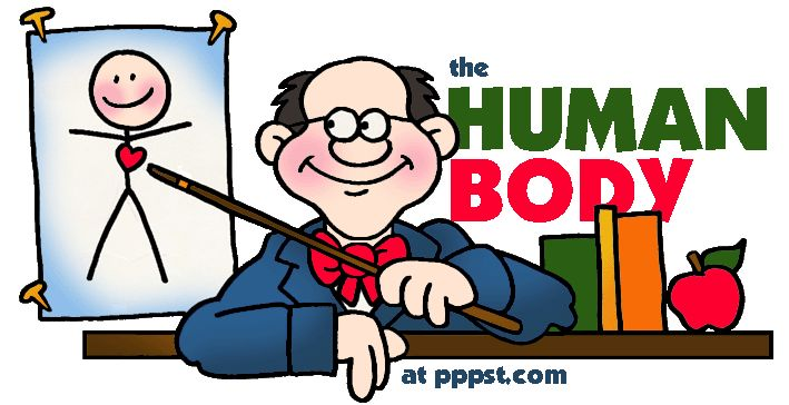 THE HUMAN BODY - FREE presentations in PowerPoint format, interactive activities, lessons for K-12