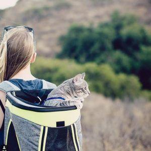 Sahiplerine eşlik eden 23 kampingçi kedi