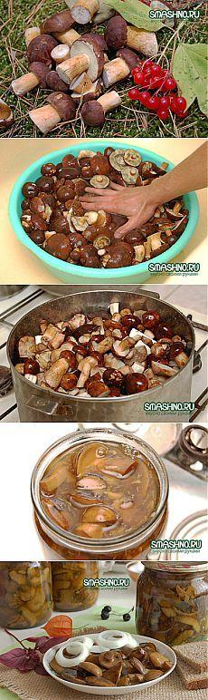 Как замариновать грибы на зиму. Вкусные маринованные грибы. - пошаговый рецепт с фото