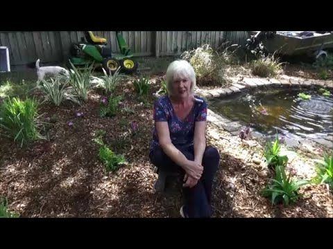 135 best images about how to compost on pinterest for Fishing worm farm