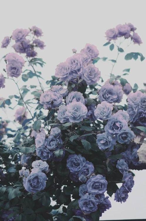 42+ Beauty Aesthetic Flowers Ideas