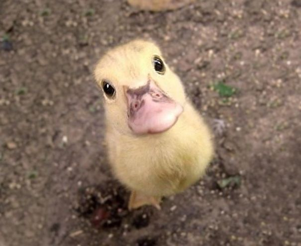 30 Baby Animals That Will Make You Go 'Aww'
