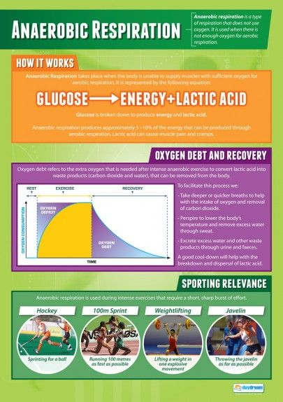 Anaerobic Respiration | Physical Education Poster