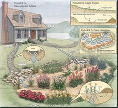 How To Build A Rain Garden – A Solution For Soggy Wet Areas On Your Property - Shawna Coronado