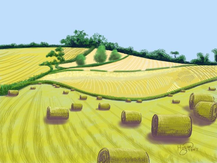 Yorkshire Wolds 2