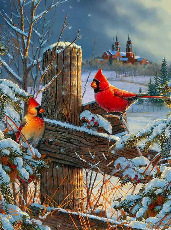 675 best images about cardinals on pinterest more bird - Winter cardinal wallpaper ...