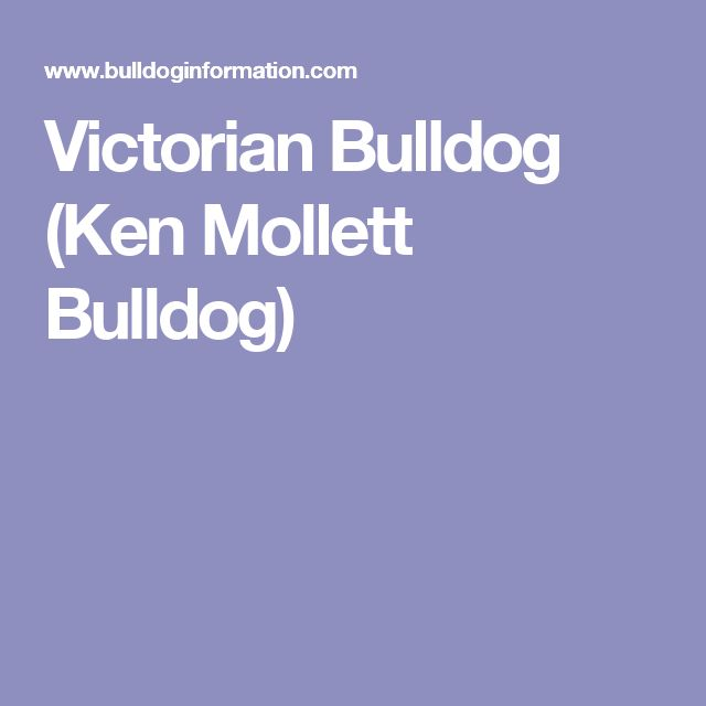 Victorian Bulldog (Ken Mollett Bulldog)