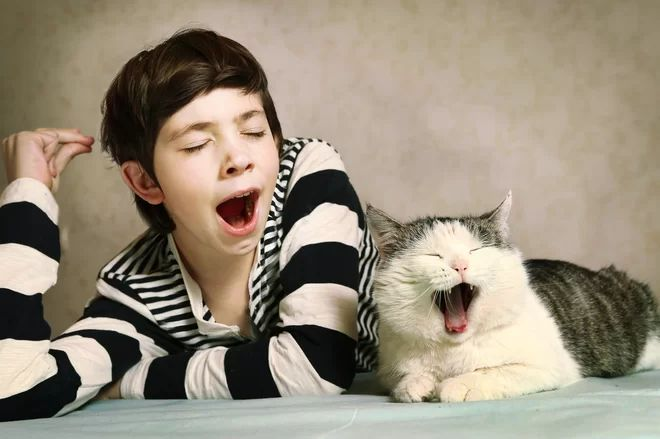 Why Do Seasonal Allergies Make You Feel Sleepy Feeling Sleepy English For Beginners Yawning