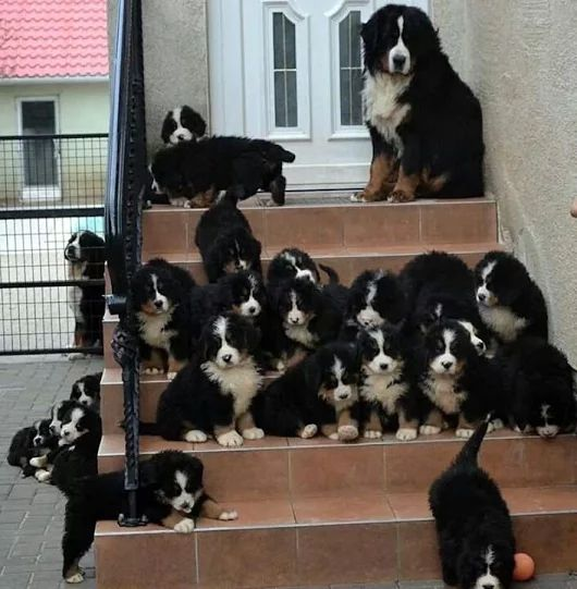 Berner heaven! I would keep them all