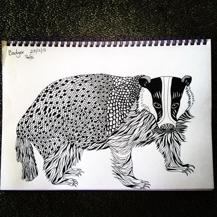 A #badger is now inhabiting my #sketchbook  #drawing #tdkpeepshow #blackandwhite #pendrawing #smukdesign #ink #blackpen #art #drawingismytimeout #monochrome