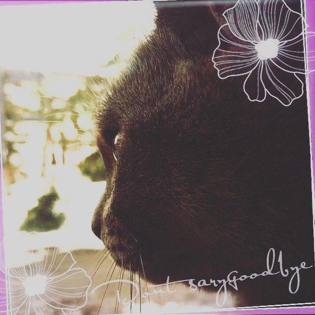 #猫#愛猫#かわいい#昔#大人#cat#lovecat#cute#formerly#adult#語らせて  昔遊んだ人は、私よりも10個以上離れてて、大人な気がしてた。 遊ぶところ、持ってるもの、考え方、どれをとっても大人びている気がしてた。 遊んでるだけで、付き合ってなかったあの人。 彼には彼女がいて、私にも彼氏がいて。 「お互い、割り切って遊ぼう」 そういうことになって、遊んでた。 なぜか、それが大人の関係なんだなーって思ってて、割り切るってどういう事なのかよく分からないまま、遊んでた。 ちょうど、今頃の時期。 付き合ってた彼との終わりが見えてきたあたりに、寂しさ紛れにあってしまった。 お互いに相手がいると知ったのは、会ったあとの話。  確か、一回りくらい違ったはずの人。 ワガママな小娘が、寒いから遊んでと呼び出して、夜勤明けに来てくれた。 別に、特に理由も聞かずに、遊んでくれた。 当然、体の関係もあった。 その頃、相性なんてよくわからなくて、ただ人肌が恋しかっただけだった。 自分の彼氏との終わりが見えて、でも、別れるために色々な準備がどうしても必要で。…