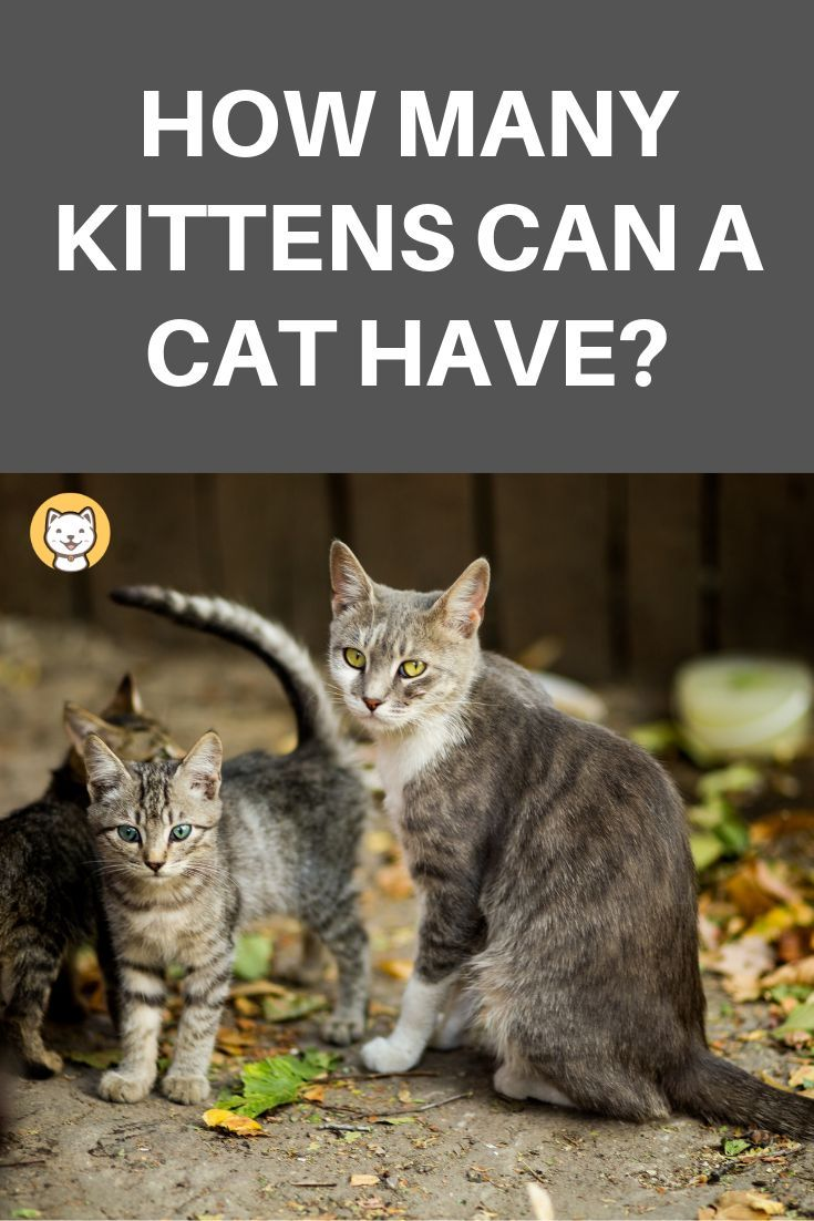 How Many Kittens Can A Cat Have Feral Cats Pregnant Cat Kittens
