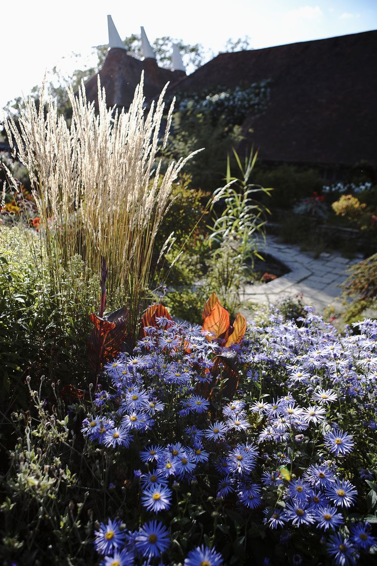 8 Best Ornamental Grasses To Add Privacy To The Garden Ornamental Grasses Tall Ornamental Grasses Grasses Landscaping