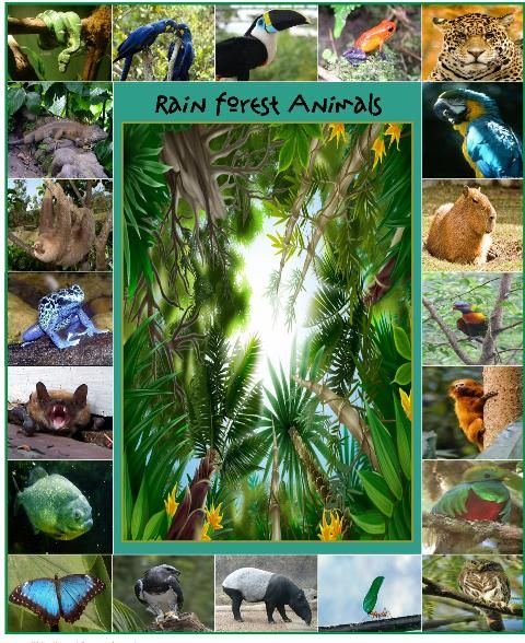 LOTS of free resources about the amazon rainforest and animal on this page!