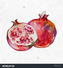 Image result for watercolour pomegranate