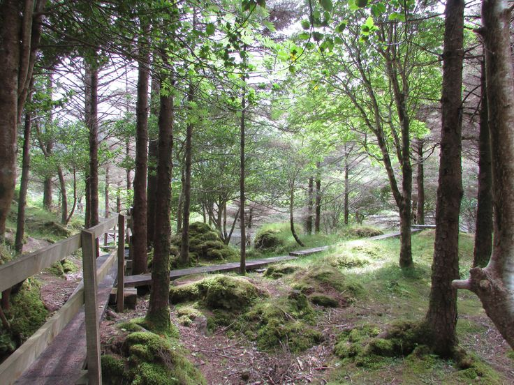 Glanteenassig Woods, Co. Kerry