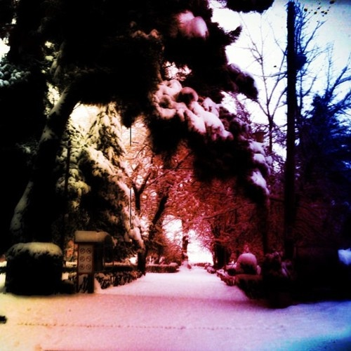Snowed park!