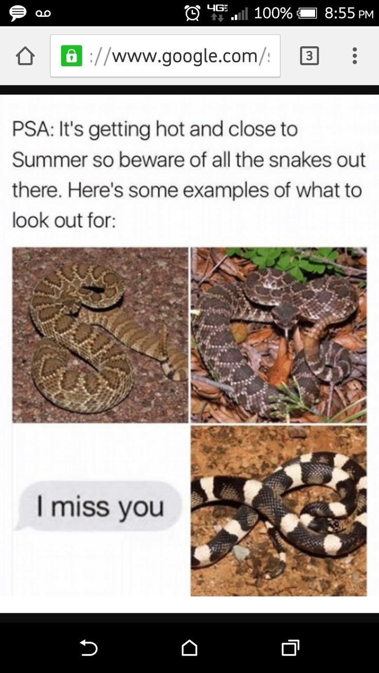 Watch out for ALL snakes (not original but still funny)