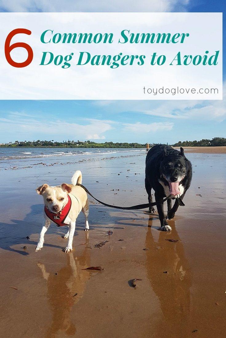 Common summer dog dangers to avoid