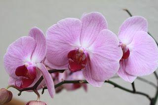 Die Kinderkueche: Pflegetips für schöne Orchideen / Orchideen pflegen / Orchideen wässern
