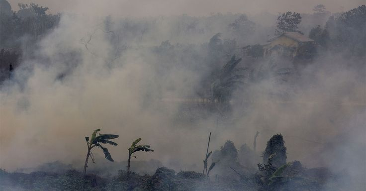 #Indonesia's peat fires have released more #greenhouse gases than #Germany does in an entire year !!