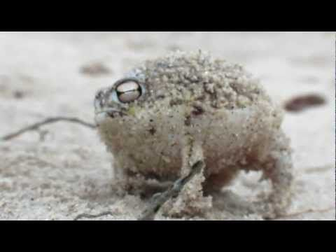 World's cutest frog will cure what ails you. Okay - he sounds a lot cuter than he looks!