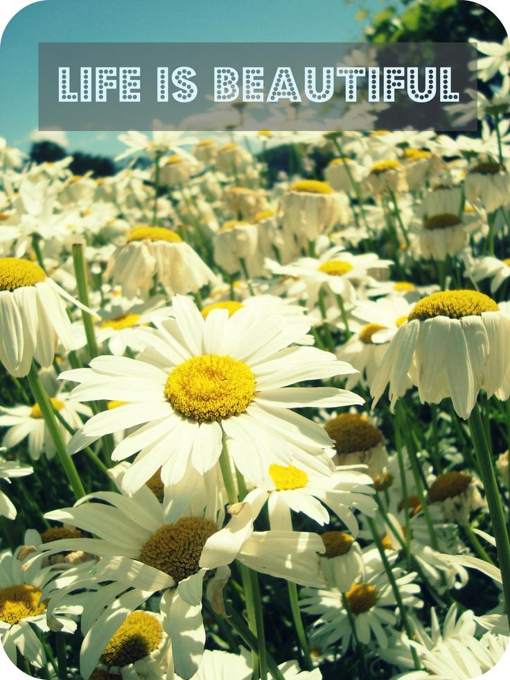 Life IS beautiful!  Nice photo Hannah!