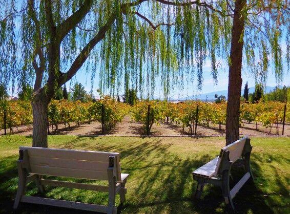 Pahrump Valley Winery Vineyard at Wine Ridge