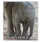 Help save elephants!