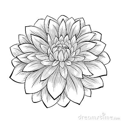 Beautiful monochrome black and white dahlia flower isolated on white background by 1evgeniya1, via Dreamstime