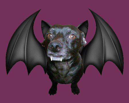 doobie doos free halloween music ringtone downloads httparea512htmlplanetcom - Free Halloween Music Downloads Mp3