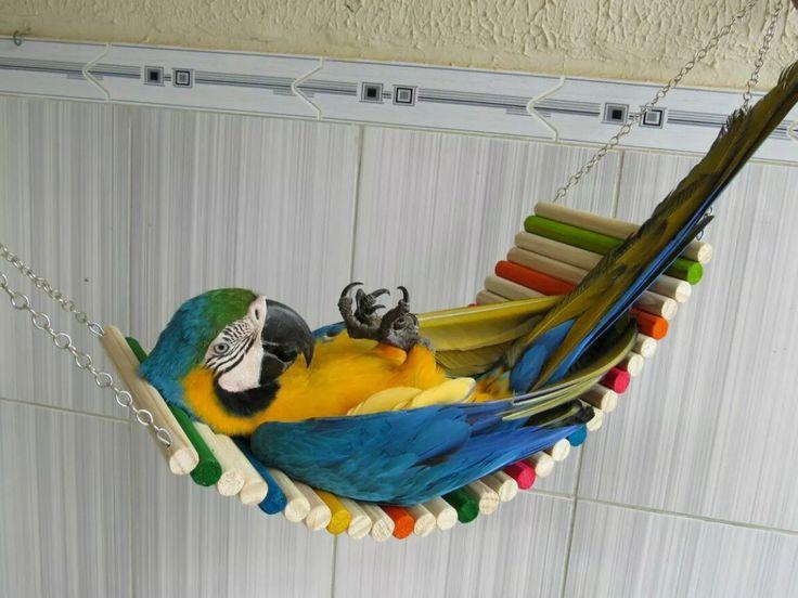 rede aconchego p/ papagaio jandaia e outras encanto das aves
