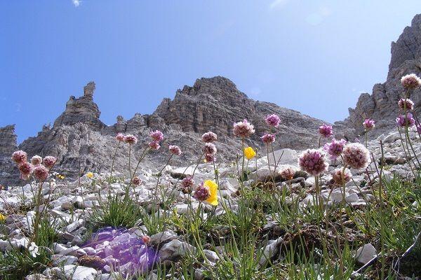 fiori-di-montagna.jpg (600×400)
