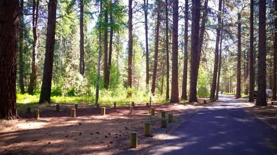 A pleasant, small spring runs through the center of this popular, shaded campground. Located just southwest of Sisters, Oregon, Cold Springs Campground is nestled below a thick Ponderosa Pine forest mixed with aspen in the wet areas.
