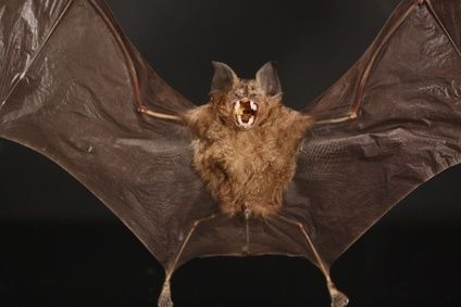 How to Make Some Terrific Hanging Bat Decorations thumbnail