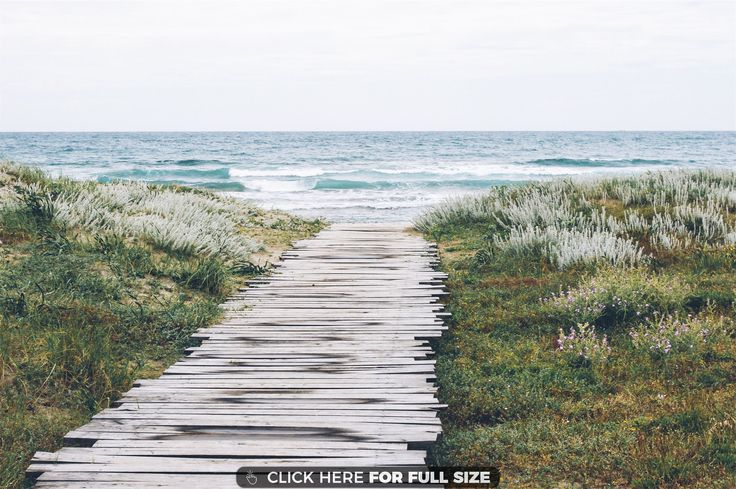 Blue Flowers Grass Gray Green Path Sea White