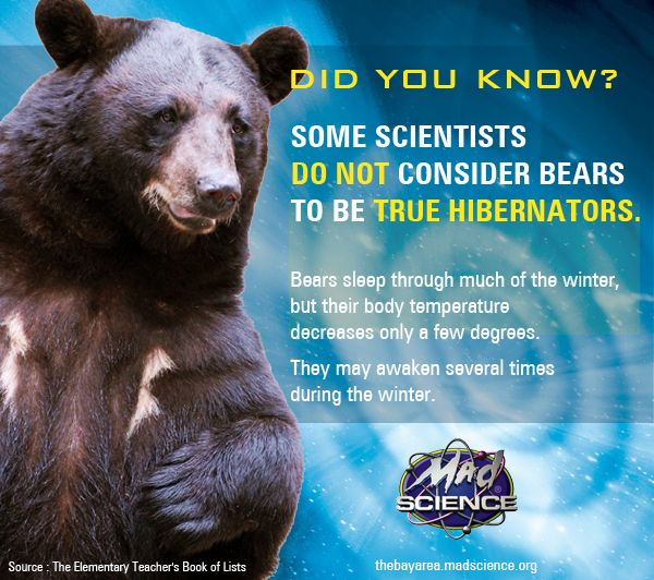 Did you know? Some scientists do not consider bears to be true hibernators. #winter