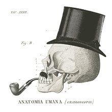 Fototapet - Dandy Bones II