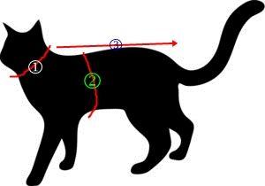 Pola baju kucing (anjing) free download | La femme écrit