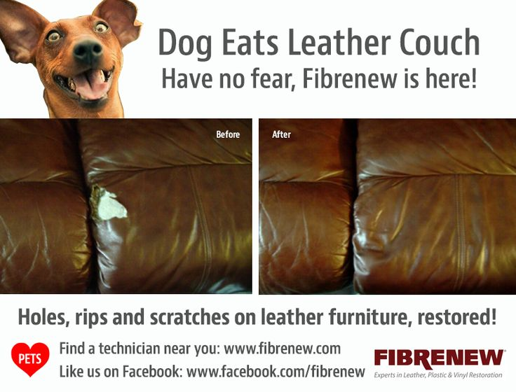 Dog Eats Leather Couch Leather Repair Franchise Http