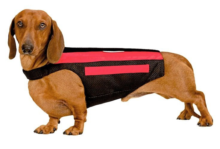 Dog Back Brace Dogs, Dachshund, American cocker spaniel