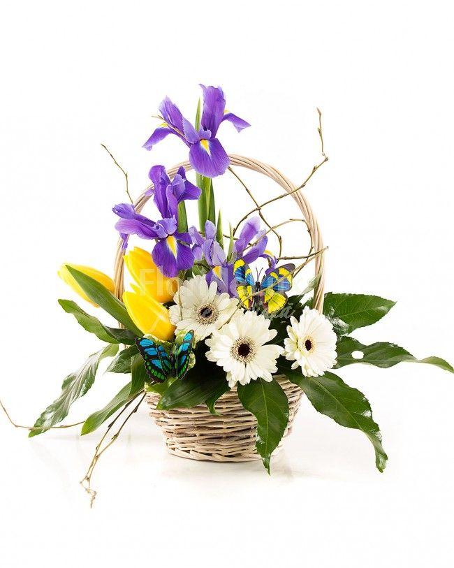 Cos primavaratic in nuante deosebite de mov instens si galben pasional. Cos cu irisi, lalelele si gerbera in decor de verdeata proaspata.