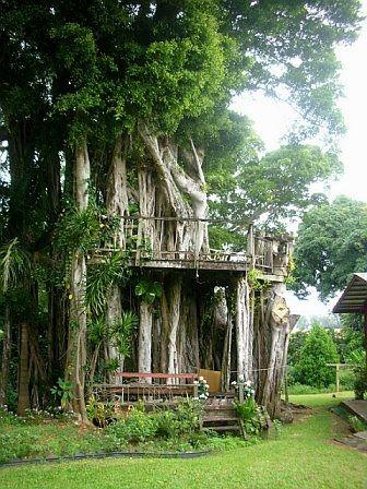 Banyan tree house in one of my favorite places- Kohala Coast, Hawaii.
