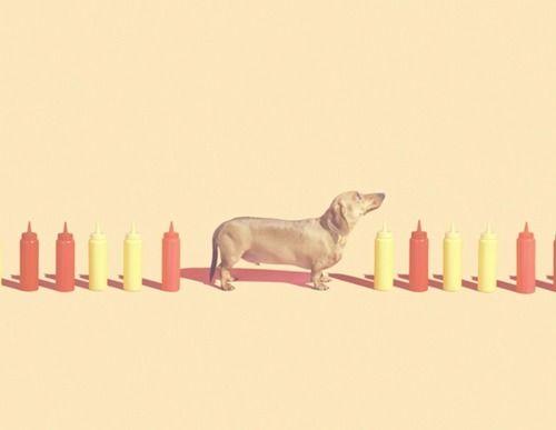 haDachshund Pin, Mini Dachshund, Dachshund Kisses, Doxie Lovin, Dogs Tots, Minis Dachshund, Condiments Weenie, Minis Weinies, Dachshund Cutie