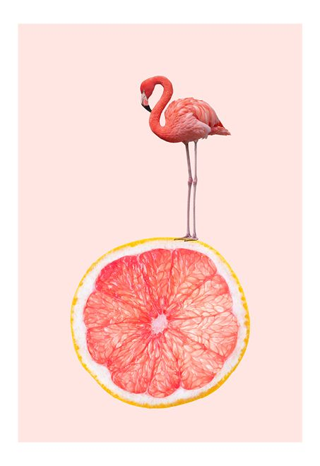 Pink flamingo pink grapefruit