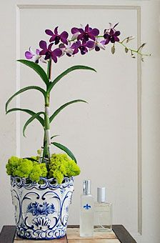 have several potted orchid plants, with the bright green reindeer moss at the base - guest book, gift table, etc