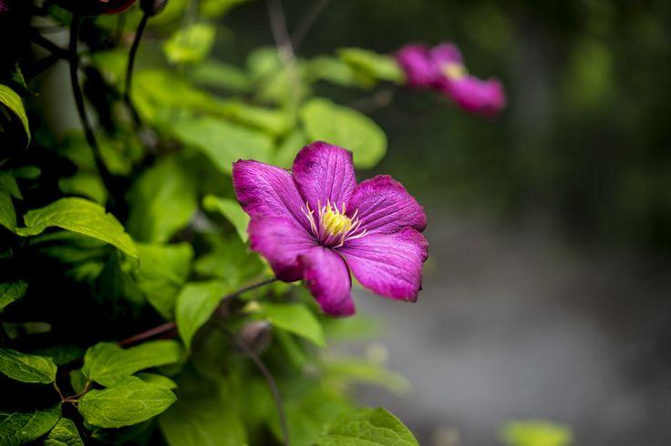 Flowers by Filipe Coelho on 500px