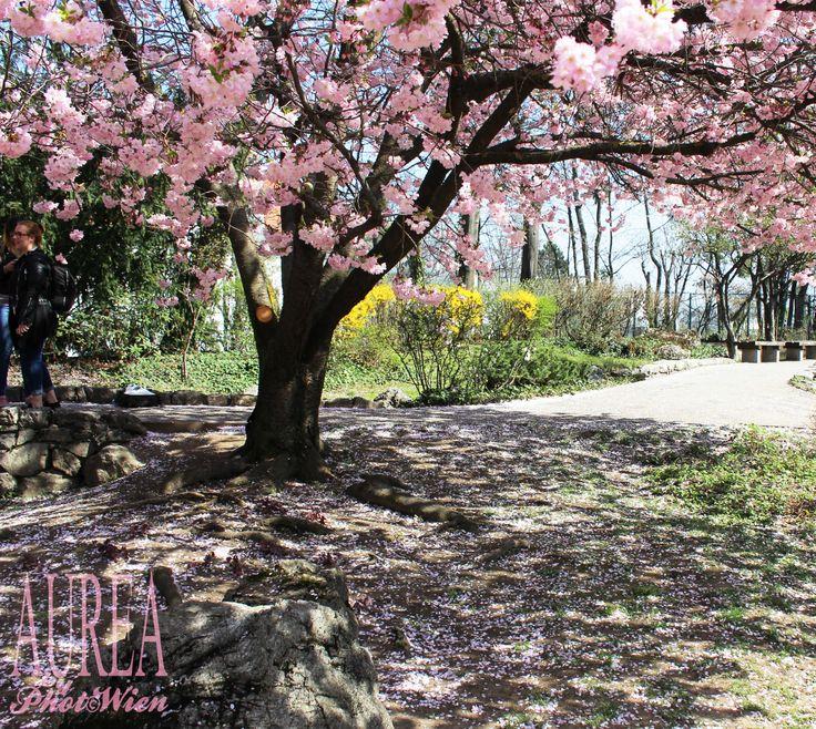 Setagayapark Vienna – Reading A Japanese Garden