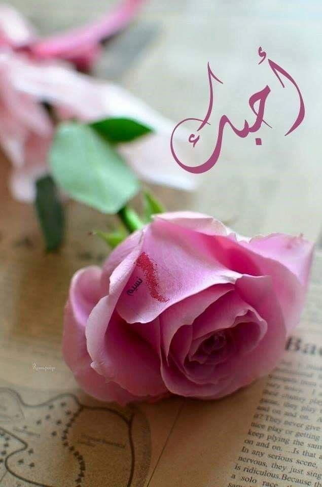 وأنت الذي جئت مختلفا لست صديقا ولا حبيبا لكنك حياة نزار قباني أشعار نسيم Flower Background Iphone Flowers Bouquet Gift Pink Flower Photos